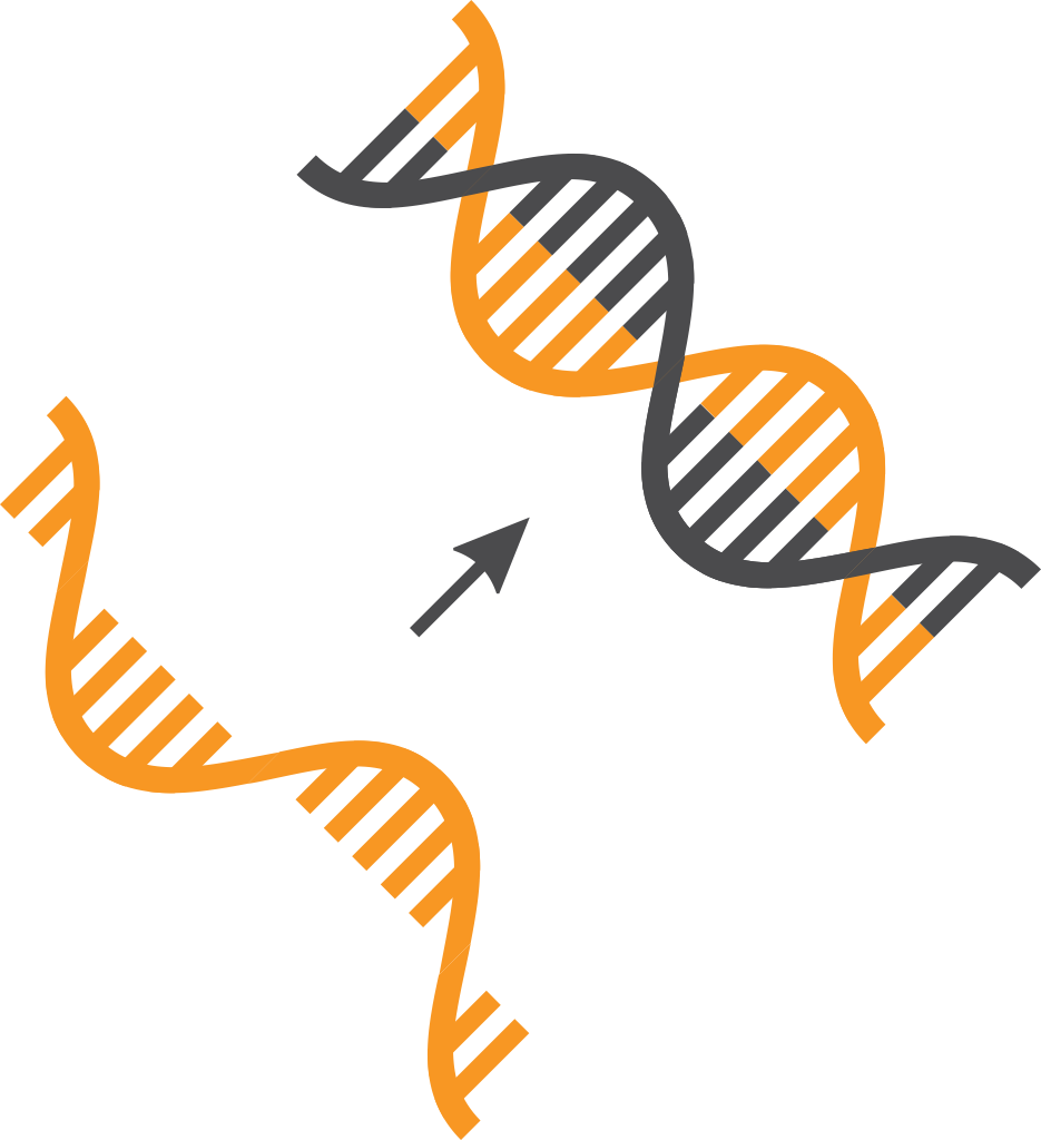NGS Sample Preparation - cDNA Synthesis